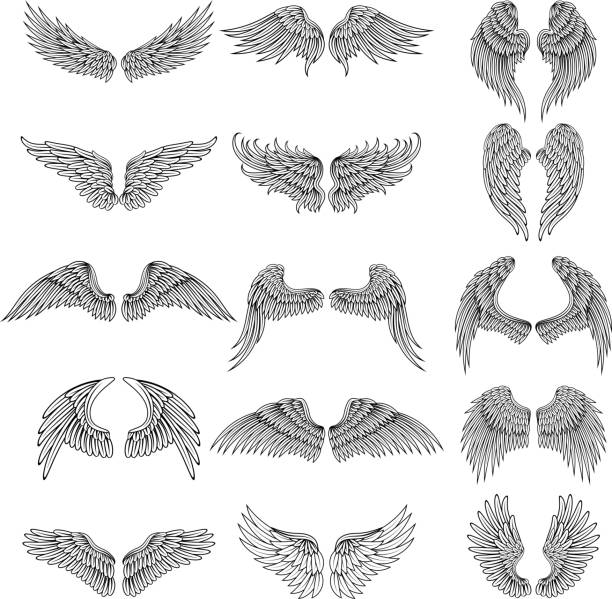tattoo design pictures of different stylized wings. vector illustrations for s design - animal wing stock illustrations