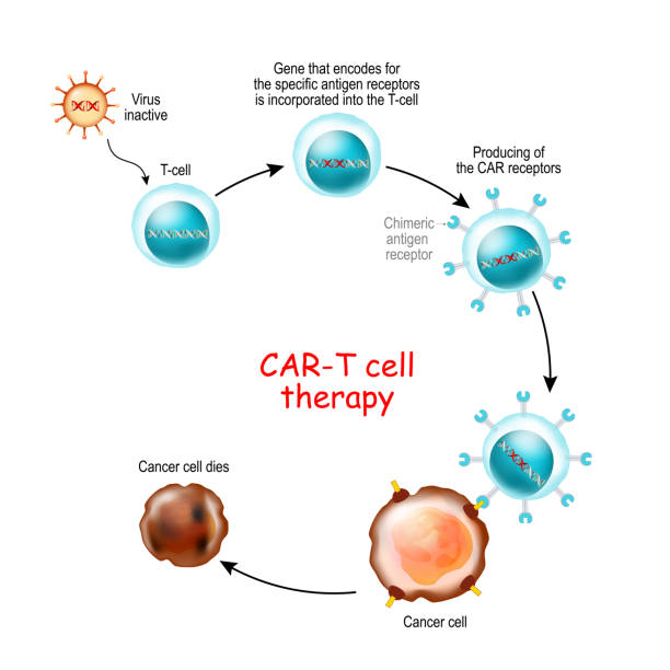 CAR T-cell therapy CAR T-cell therapy is a immunotherapy that uses genetically engineered T cells to intensify the immune systems response to cancer. T-cells with Chimeric antigen receptor recognize and kill the cancer cells in the body. physical therapy stock illustrations