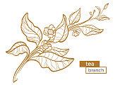 Tea bush branch. Vector