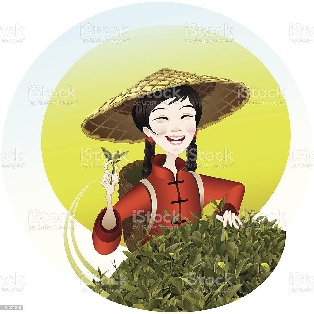 Tea Leaf Harvesting royalty-free stock vector art