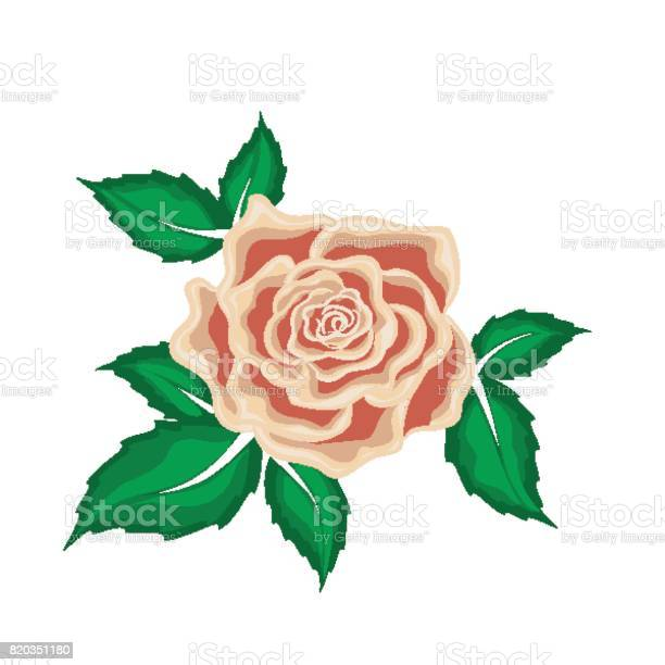 Tea rose in leaves in cartoon style vector id820351180?b=1&k=6&m=820351180&s=612x612&h=gv5i6dwxwguhgnzpihdu9p 13amsvpvelje 6wkbogm=