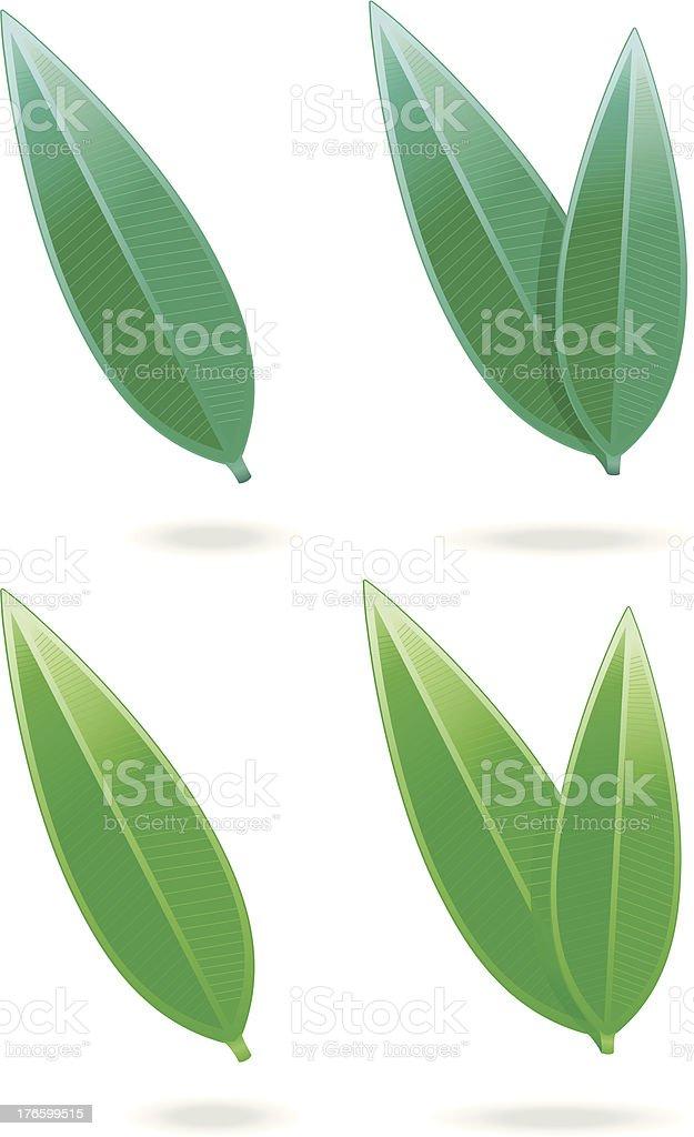 Tealeafs / long leafs  (2Varios). royalty-free stock vector art