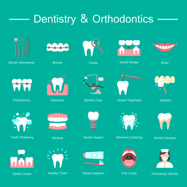 illustrazioni stock, clip art, cartoni animati e icone di tendenza di teeth, dentistry medical flat icons. - denti