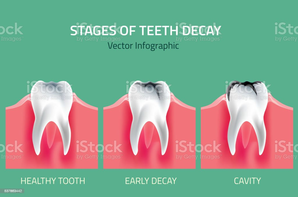 Teeth vector Anatomy vector art illustration