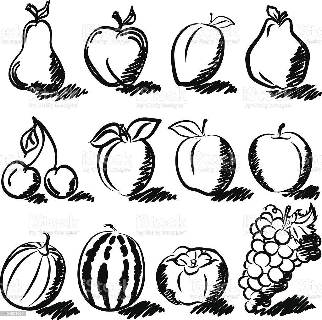 temperate fruits drawing vector set royalty free stock vector art