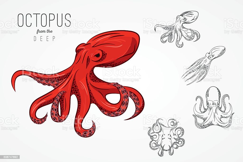 Template For Emblem With Octopus Vector Illustration Stock Vector ...