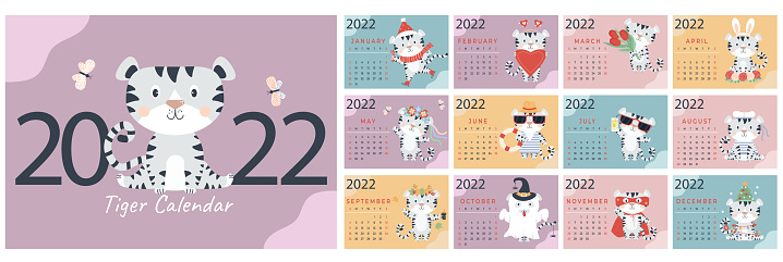 2022. Template for the annual animal calendar. A set of 12 pages and a cover with a cute white tiger. Year of the Tiger according to the Chinese or Eastern calendar. Vector illustration