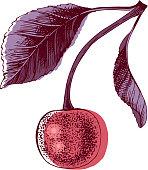 Hand drawn colorful cherry with leaves. Vector illustration