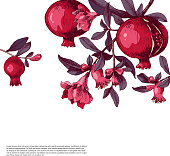 Pomegranate background with flowers, fruits and place for your type design. Vector illustration