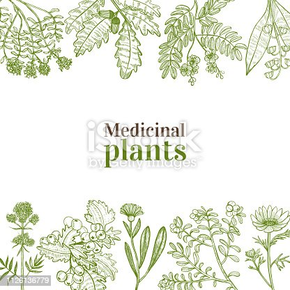 Template with Medicinal Plants. Floral Composition in Hand-Drawn Style for Banners Fliers Posters Surface Design Cosmetic. Vector Illustration