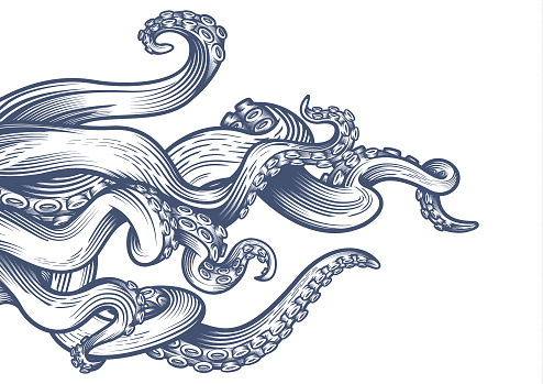 Tentacles of an octopus.