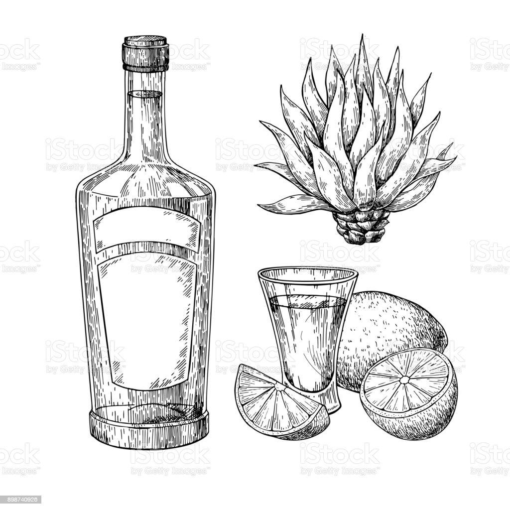 Tequila botella azul agave y tiro el vidrio con cal. Dibujo vectorial de bebida de alcohol mexicano - ilustración de arte vectorial