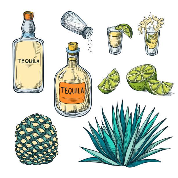 bildbanksillustrationer, clip art samt tecknat material och ikoner med tequila flaska, sköt glas och agave rot, vektor färg skiss illustration. mexikanska alkohol drycker menyn designelement - cactus lime