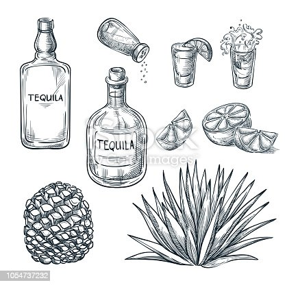 Tequila bottle, shot glass and ingredients, vector sketch. Mexican alcohol drinks menu design elements. Agave plant and root illustration.