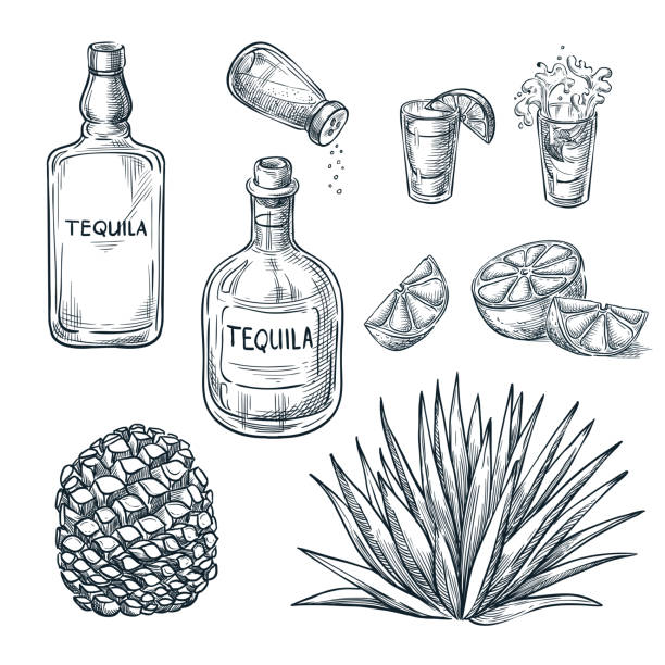 Tequila bottle, shot glass and ingredients, vector sketch. Mexican alcohol drinks. Agave plant and root. Tequila bottle, shot glass and ingredients, vector sketch. Mexican alcohol drinks menu design elements. Agave plant and root illustration. salt seasoning stock illustrations