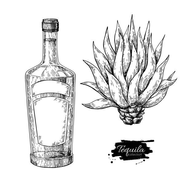 Botella de tequila con agave azul. Vector de bebida de alcohol mexicano dibujo. Dibujo de Cóctel - ilustración de arte vectorial