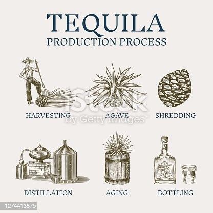 Tequila production process. Glass bottle, shot with lime, Distilled alcohol, blue agave Plant, barrel and farmer and harvest. Retro poster or banner. Engraved hand drawn vintage sketch. . Vector illustration