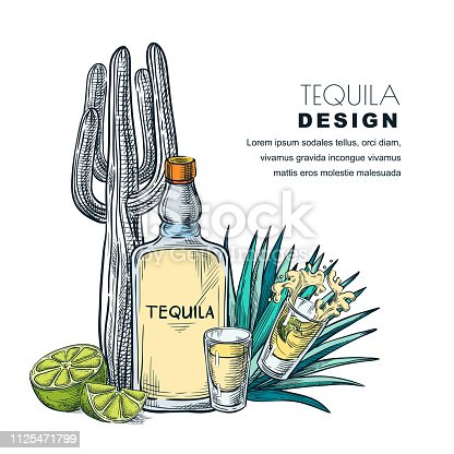 Tequila sketch vector illustration. Bar menu, label or package design. Bottle, shot glass, cactus, agave isolated on white background.
