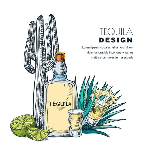 bildbanksillustrationer, clip art samt tecknat material och ikoner med tequila skiss vektorillustration. barmeny, etiketten eller design. - cactus lime