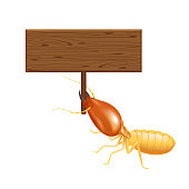 termite, clip art termites and wooden signs isolated on white background, insect species termite ant eaten wood decay and damaged wooden bite, cartoon termite and wood frame for copy space text