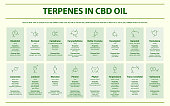 Terpenes in CBD Oil with Structural Formulas horizontal infographic illustration about cannabis as herbal alternative medicine and chemical therapy, healthcare and medical science vector.