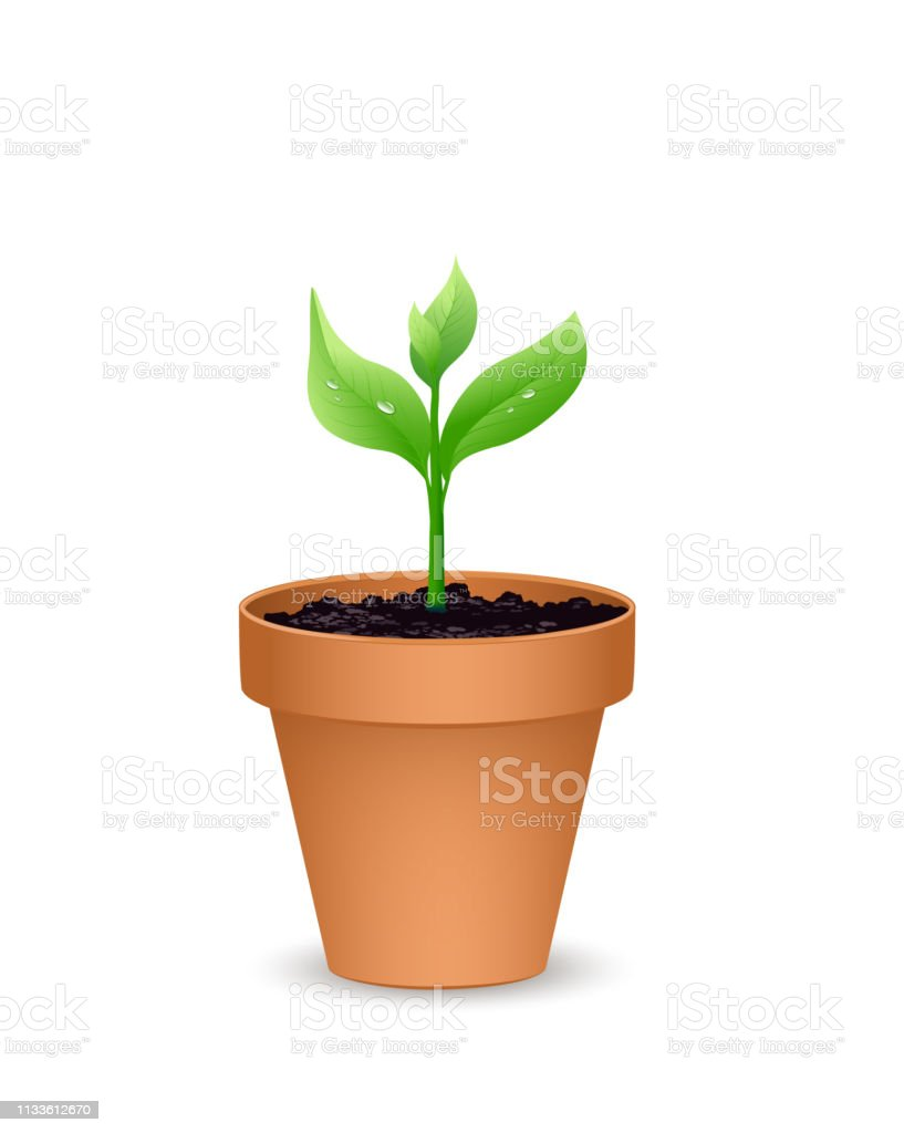 Terra Cotta Flower Pot With The Soil And Young Plant Vector Illustration Isolated On White Background Stock Illustration Download Image Now Istock