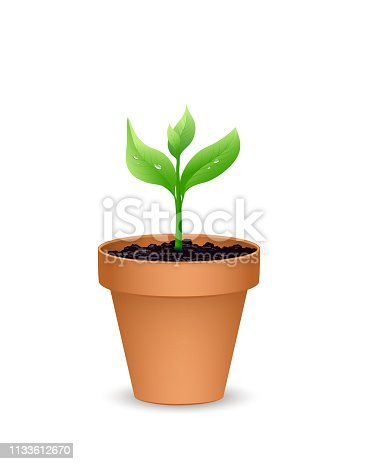 Terra cotta Flower pot with the soil and young plant, Vector illustration isolated on white background