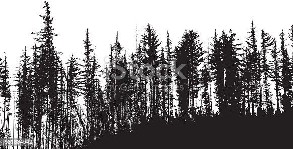 A vector silhouette illustration of a dense forest of dead and dying pine trees.