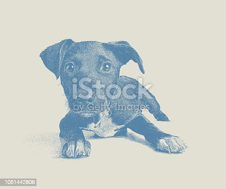 Stipple illustration of a Terrier Mixed-breed puppy hoping to be adopted