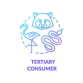Tertiary consumer concept icon. Grazing food chain link. Small carnivores and birds. Natural ecosystem idea thin line illustration. Vector isolated outline RGB color drawing