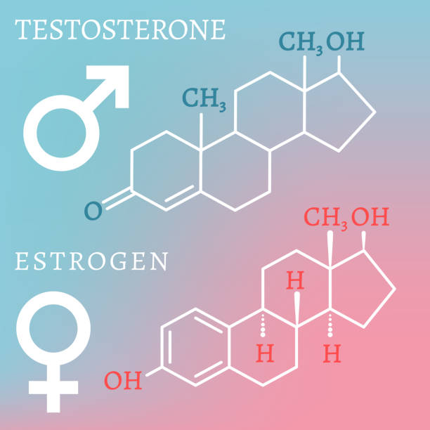 Testosterone and Estrogen Sex hormones molecular formules - estradiol and testosterone. Vector illustration isolated on a light blue and pink background. hormone stock illustrations