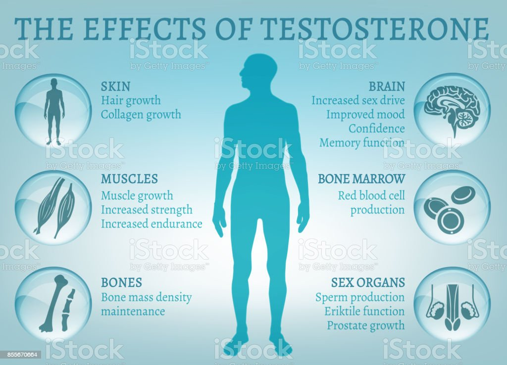 Testosterone Effects Infographics vector art illustration