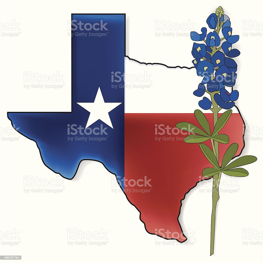 royalty free texas state flowers clip art vector images rh istockphoto com state of texas clip art vector state of texas clip art vector