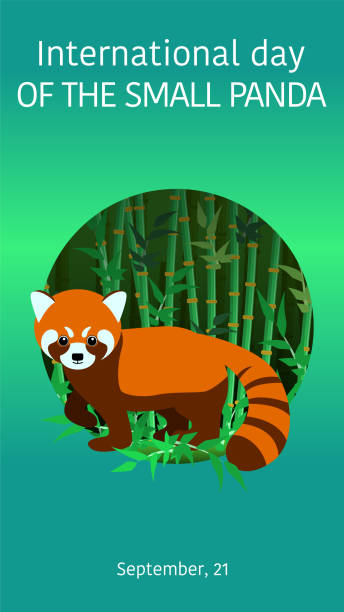 text of the international day of the small panda. poster, postcard. little red panda in the bamboo forest. image on green background. vector - wildlife calendar stock illustrations, clip art, cartoons, & icons