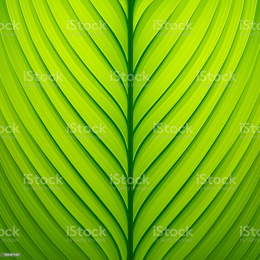 Texture of a green leaf. Vector illustration vector art illustration
