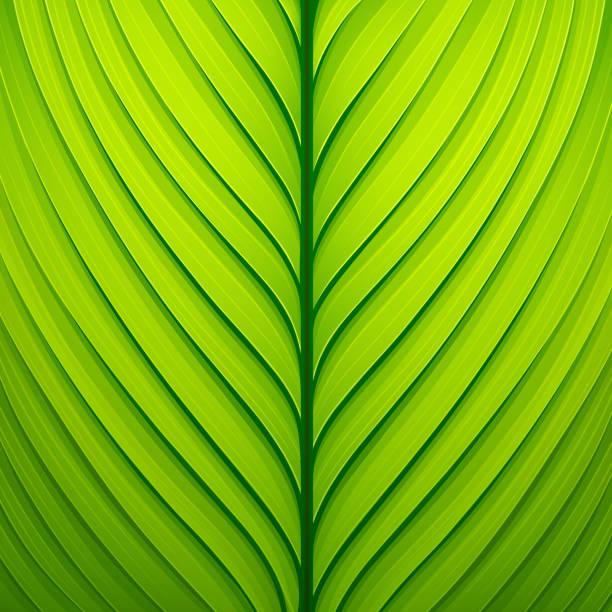 Texture of a green leaf. Vector illustration vector art illustration