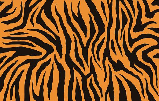 Texture Of Bengal Tiger Fur Orange Stripes Pattern Animal Skin Print Safari Background Vector Stock Illustration - Download Image Now