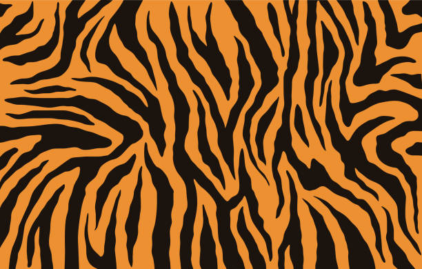 texture of bengal tiger fur, orange stripes pattern. animal skin print. safari background. vector - pasiasty stock illustrations