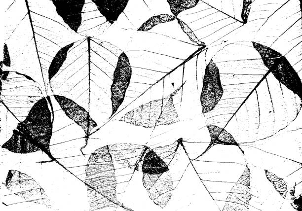 ilustrações, clipart, desenhos animados e ícones de textura de superfície de folhas secas. sobreposição de grunge. - texturas de riscos