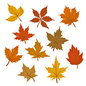 Vector set of drawings textured multicolored maple leaves.