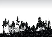 Silhouette vector illustration of a treeline made of pines on a slightly slopped piece of land