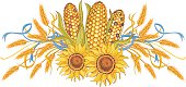 Hand drawn vector design element  in Vintage style with wheat ears, bunch of Indian corn, sunflowers and ribbon.