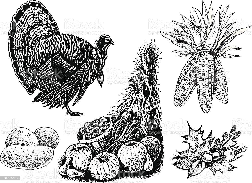 Thanksgiving Turkey, Cornucopia and Leaves vector art illustration
