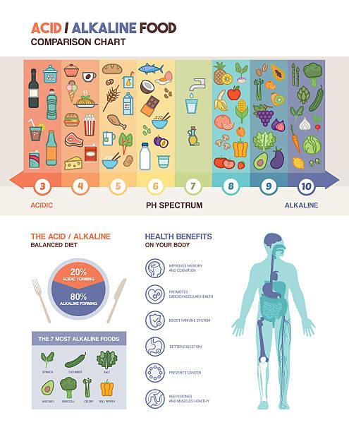illustrations, cliparts, dessins animés et icônes de l'acide régime alcalin - partie du corps d'un animal
