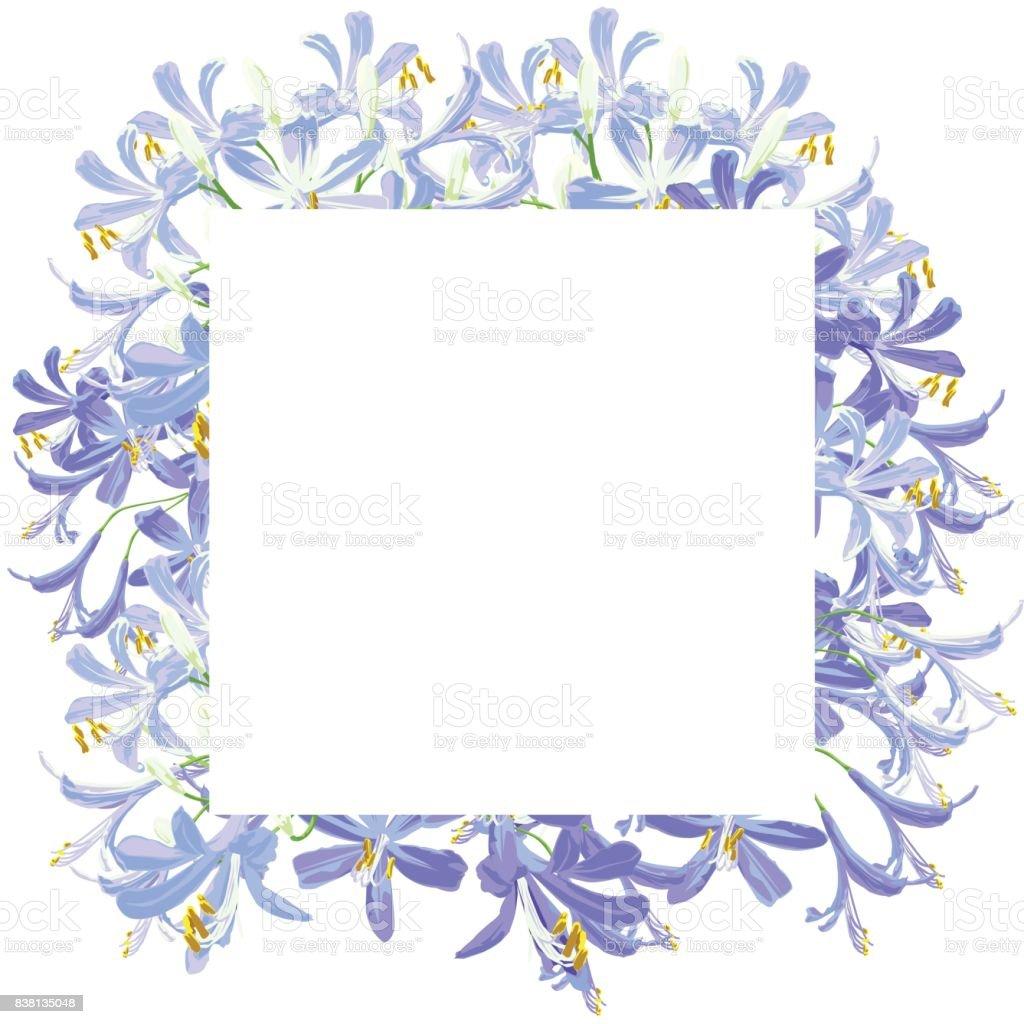The agapanthus flower for frame. vector art illustration