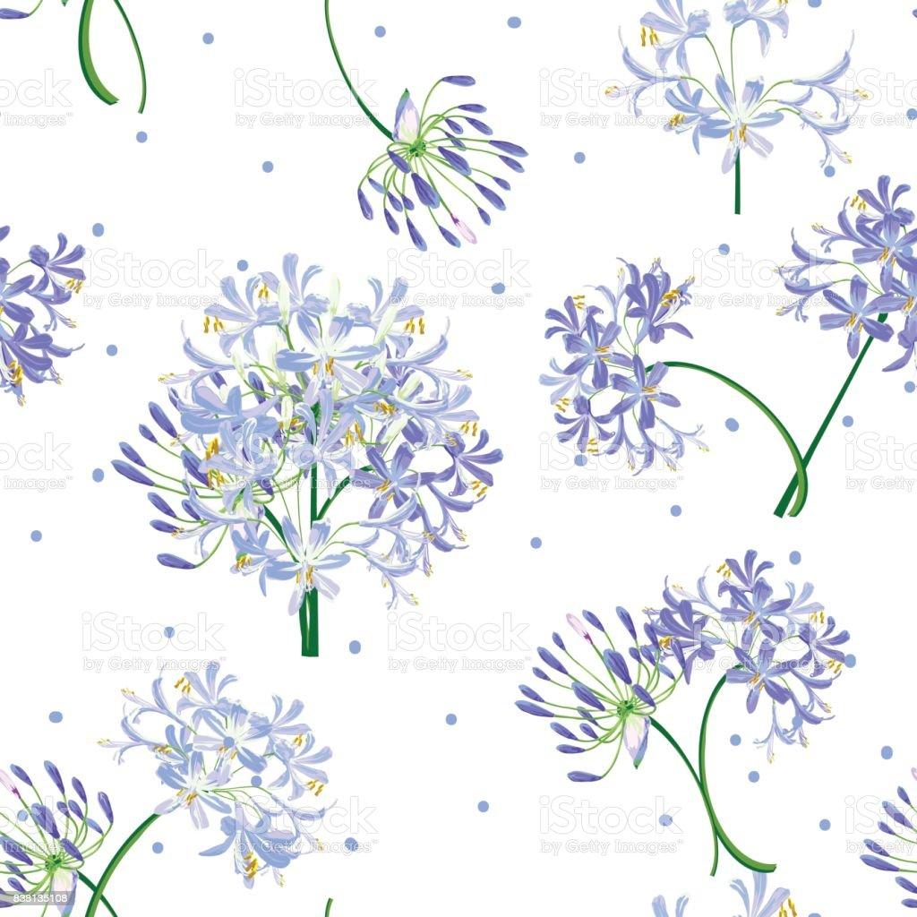 The agapanthus flower in spring. vector art illustration
