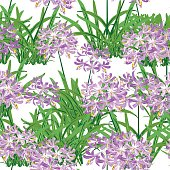 The agapanthus flower in spring. Purple flower is vector for seamless, pattern and background.