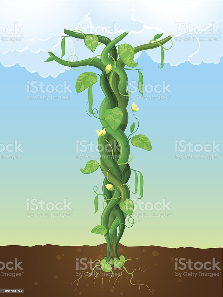 The beanstalk vector art illustration