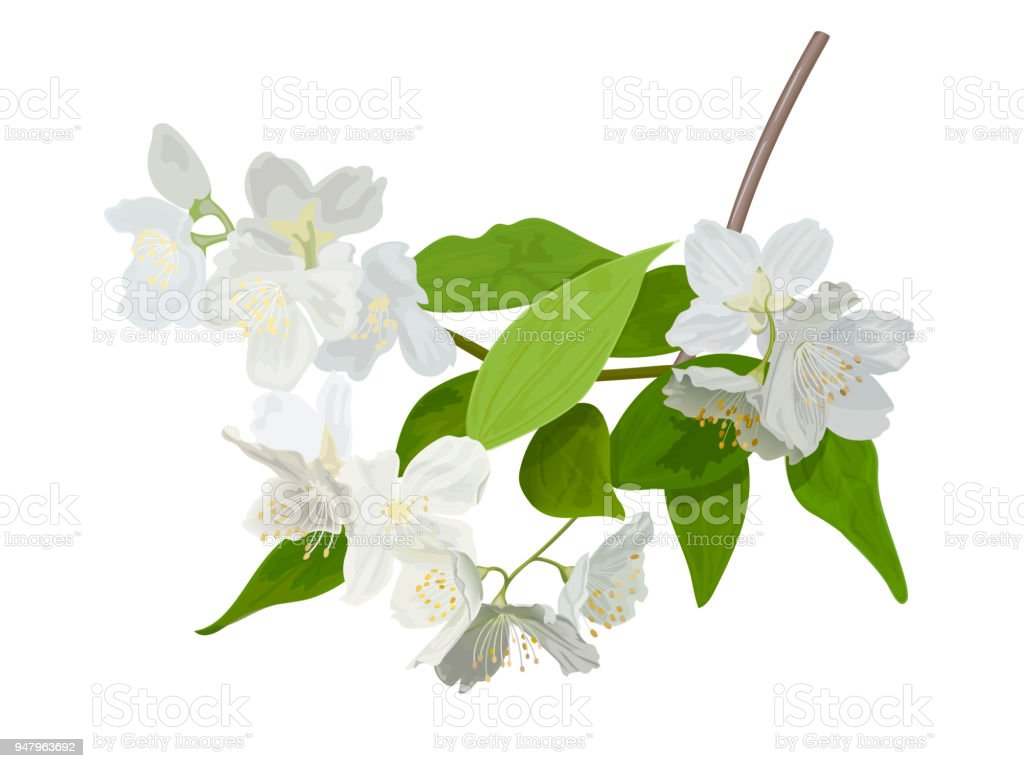 The Blossoming Season Blooming Tree With Delicate White Flowers Twig