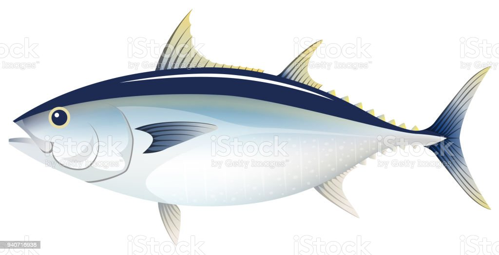 The bluefin tuna, isolated on the white background. vector art illustration